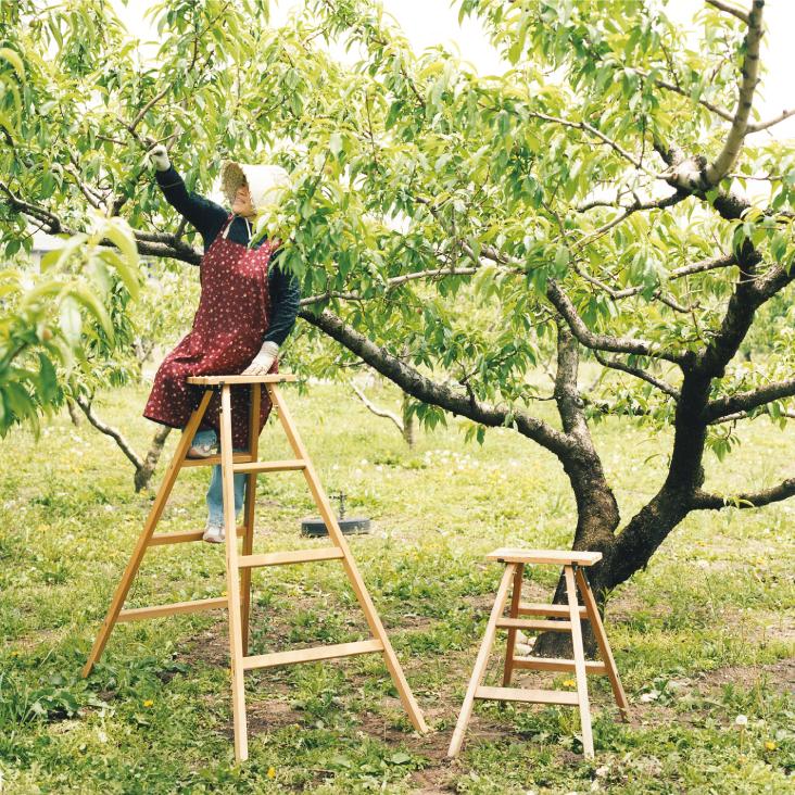 日本の木の脚立